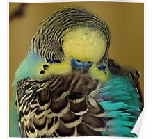 Parakeet ~ Part One Poster