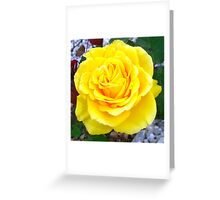 Head On View Of A Yellow Rose With Garden Background Greeting Card