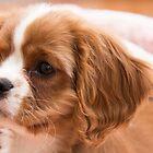 Sadie The Puppy by daphsam