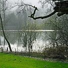 Pond near Home Farm, Ilam by Rod Johnson