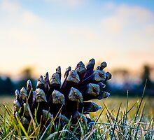 Frosty Spruce by Simon Osbaldeston