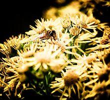 Daisy Bee by Simon Osbaldeston