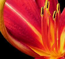 Pollen by scruffyherbert