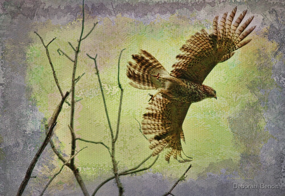 Hawk On The Hunt by Deborah  Benoit