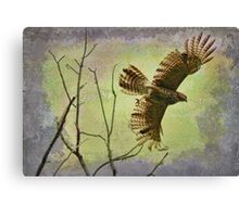 Hawk On The Hunt Canvas Print
