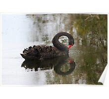 Swan Loops Poster
