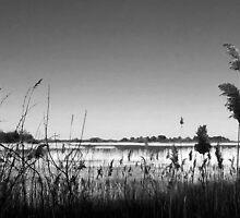 Plumb Island B&W by DrewK