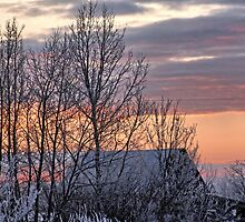 Frosty Prairie Sunrise by Tjfarthing