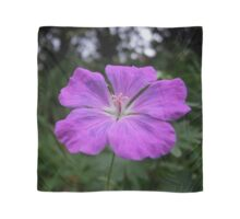 Violet Viola Flower With Garden Background Scarf