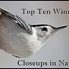 Closeups in Nature Top 10 Winner Banner by hummingbirds