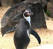 Penguin Shot by Infinite2000