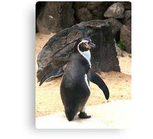 Penguin Shot Canvas Print