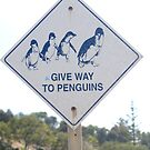 Give Way to Penguins by Adrian Paul