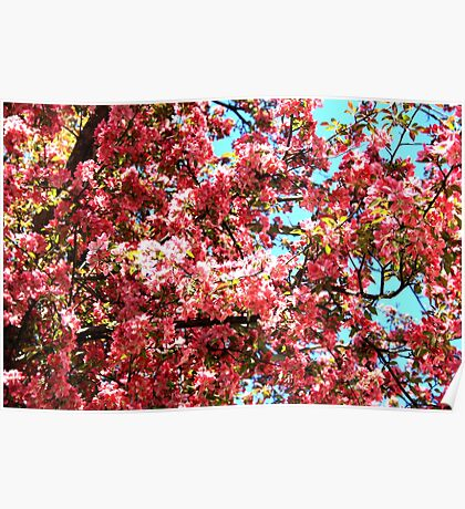 Spring Blossoms II Poster