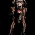 Black Great Dane by JacoWiid