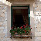 Vineyard Window by phil decocco