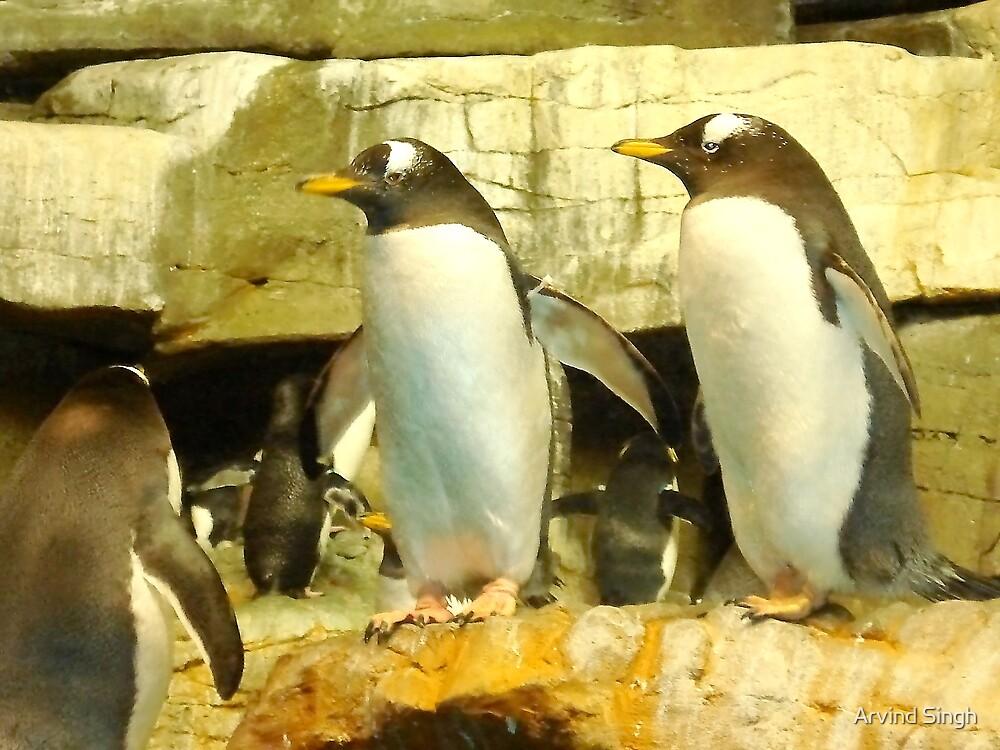 Penguin Communicating by Arvind Singh