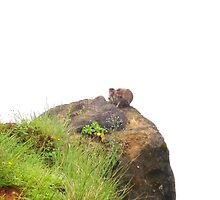 Monkeys on the edge of cliff by Arvind Singh