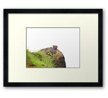 Monkeys on the edge of cliff Framed Print