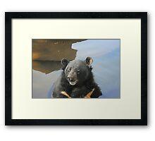 Bear Enjoing water Framed Print