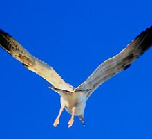 Bird about to Land.. by Arvind Singh