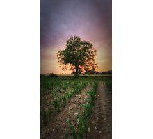 French Loner Photographic Print