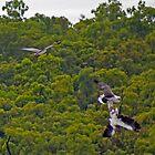 Bird Fight by Arthur Koole