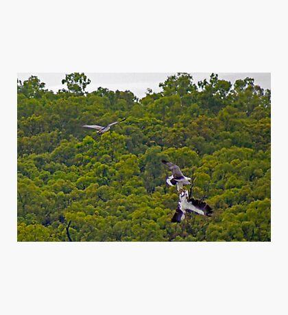 Bird Fight Photographic Print
