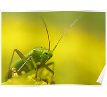yellow and green bug Poster