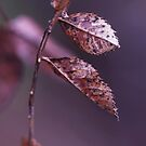 autumn marks by Morpho  Pyrrou