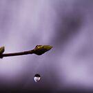 spring tear by Morpho  Pyrrou