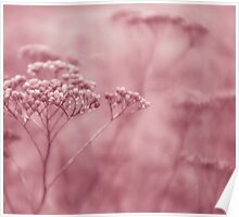 Nature in pink Poster