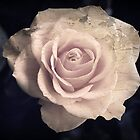 Pink Rose peeled paint effect by VintagePT