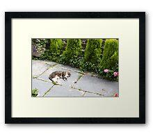 Cat Sleeping Framed Print