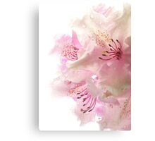 Rhodies In The Rain Canvas Print