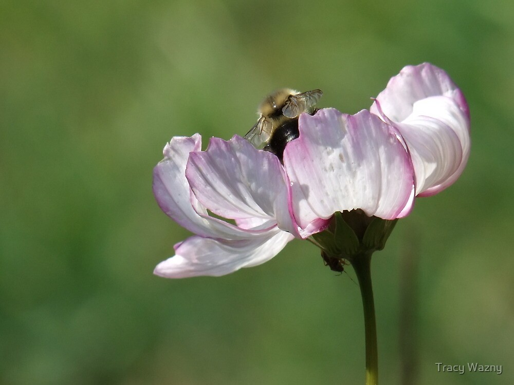 Happy Bee, Be Happy by Tracy Wazny