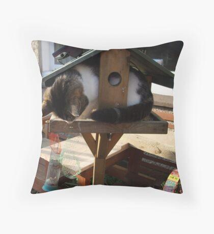 Cat eating bird food ? Throw Pillow