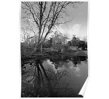 Tree Reflecions Poster