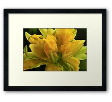 Curly Daffodil Framed Print