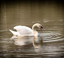 Vignette Swan  by Glen Allen