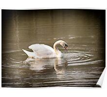 Vignette Swan  Poster