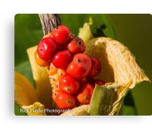 Berry-Red  Canvas Print