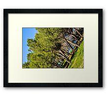 spanish trees Framed Print
