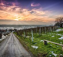 Vineyard at sunset in winter season photo by Mario Cehulic