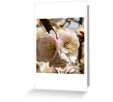 Spring Cherry Blossom Macro Greeting Card