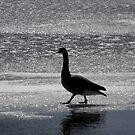 Goose Walk by katpix