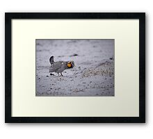 Prairie Chicken 2013-2 Framed Print