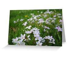 Lavender Underfoot Greeting Card