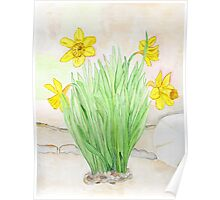 Daffodils Spring 2013 Poster