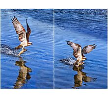Osprey Diptych Photographic Print